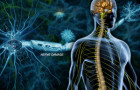 Multiple Sclerosis (MS) Information Page